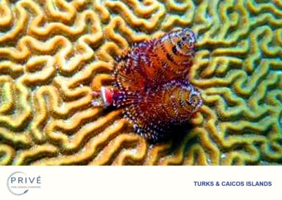 Snorkeling - A myriad of Marine Life and diversity just below the surface