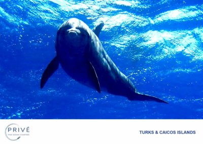 Scuba Diving - JoJo the Dolphin | Photo by Garin J. Bescoby
