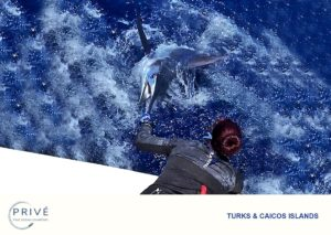 Captain Trish belly down on boat transom taking the bill of giant blue Marlin by the hand