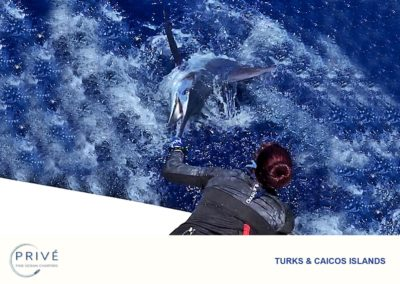 Deep Sea Fishing - Blue Marlin - Bill Fish - Big Game