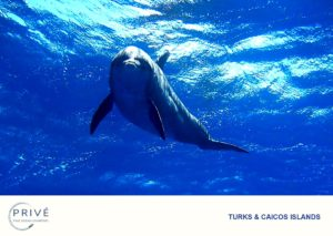 """""""Jo Jo"""" The Turks and Caicos' most famous wild dolphin"""