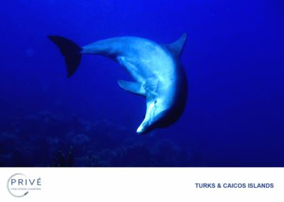 Scuba Diving - JoJo the Dolphin - National Treasure of TCI | Photo by Garin J. Bescoby