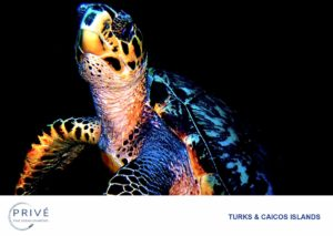 Hawksbill Turtle photographed on a night dive in Turks and Caicos Islands