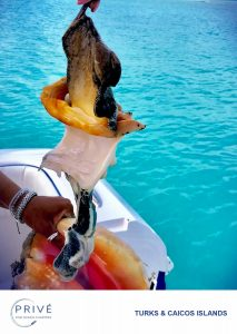Removing conch from its conch shell on boat stern